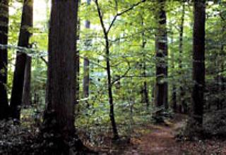 オークの森イメージ